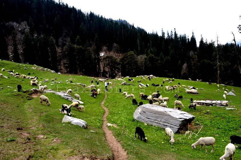 Meadows at Hampta Pass Trek (Manali)